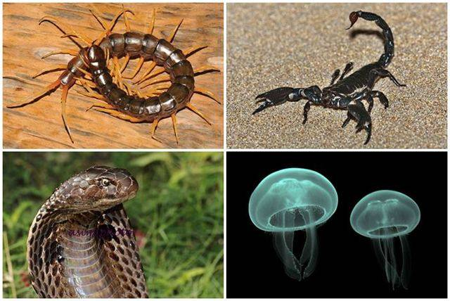 Photo of 7 Dangerous or frightening animals in Thailand with Thai name