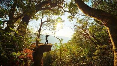 Photo of Khao Yai National Park in Thailand, complete guide