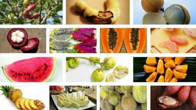 Photo of 14 of the best fruits from Thailand with Thai name