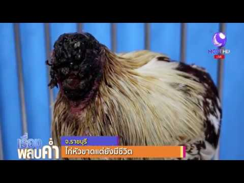 Photo of A Chicken has been living without head for 10 days in central Thailand!